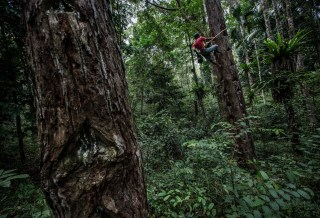 Why social forestry: Securing the sap