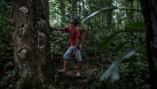 In Indonesia, social forestry gets socialized