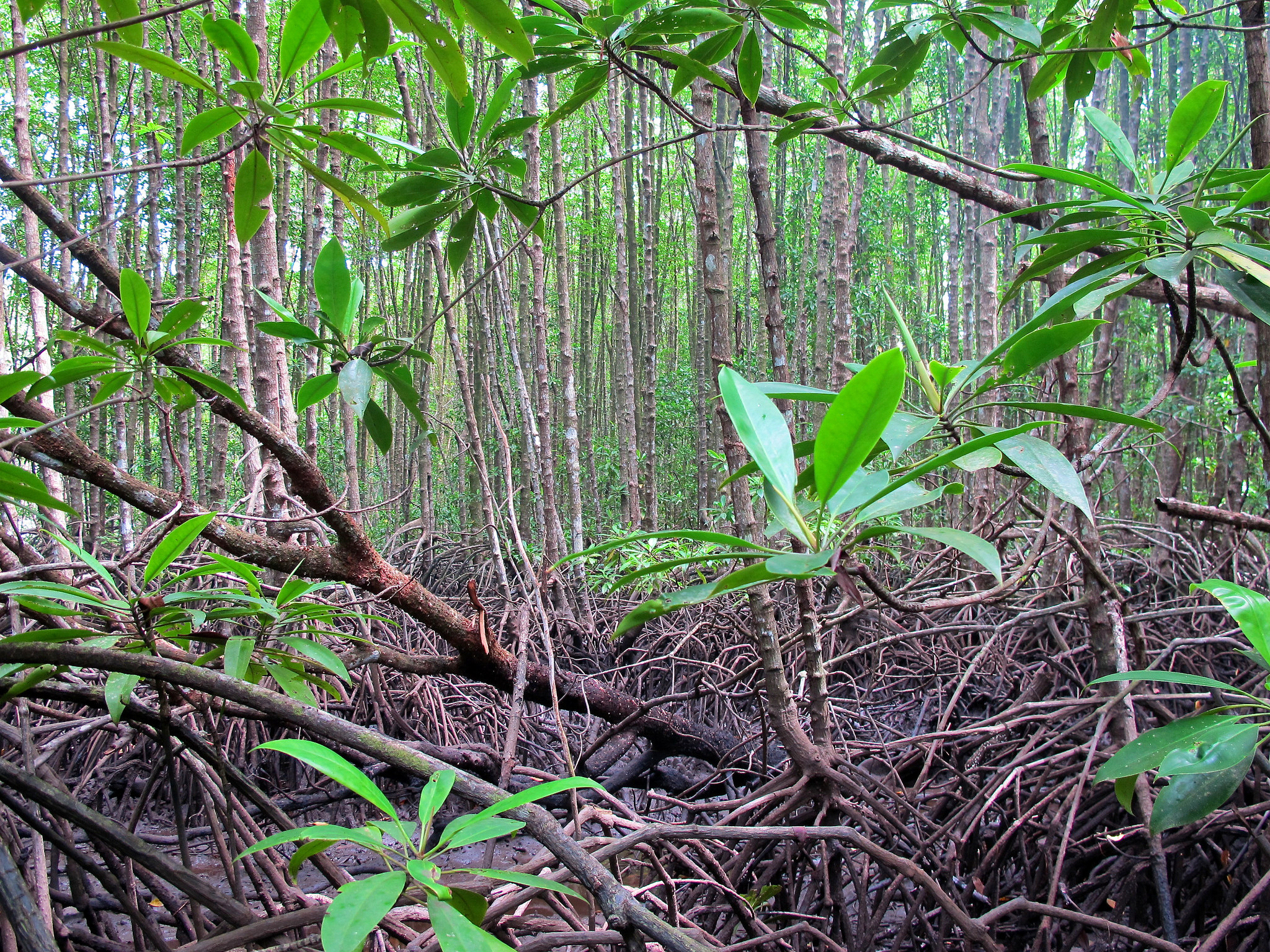 Taking stock of carbon in mangroves