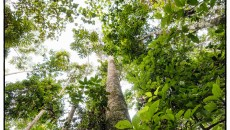 Outcomes for forests at the Bonn Climate Change Conference