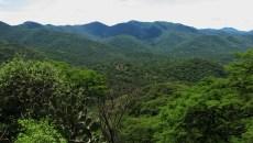 Estado, necesidades, brechas y oportunidades para la restauración forestal en México