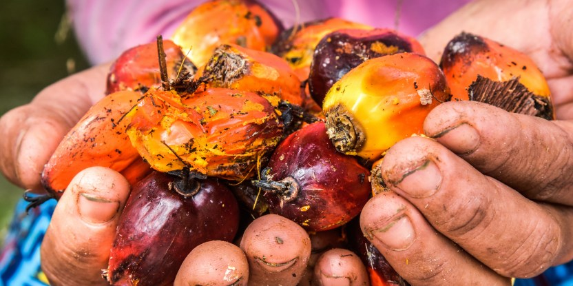 Palm oil, oil palm