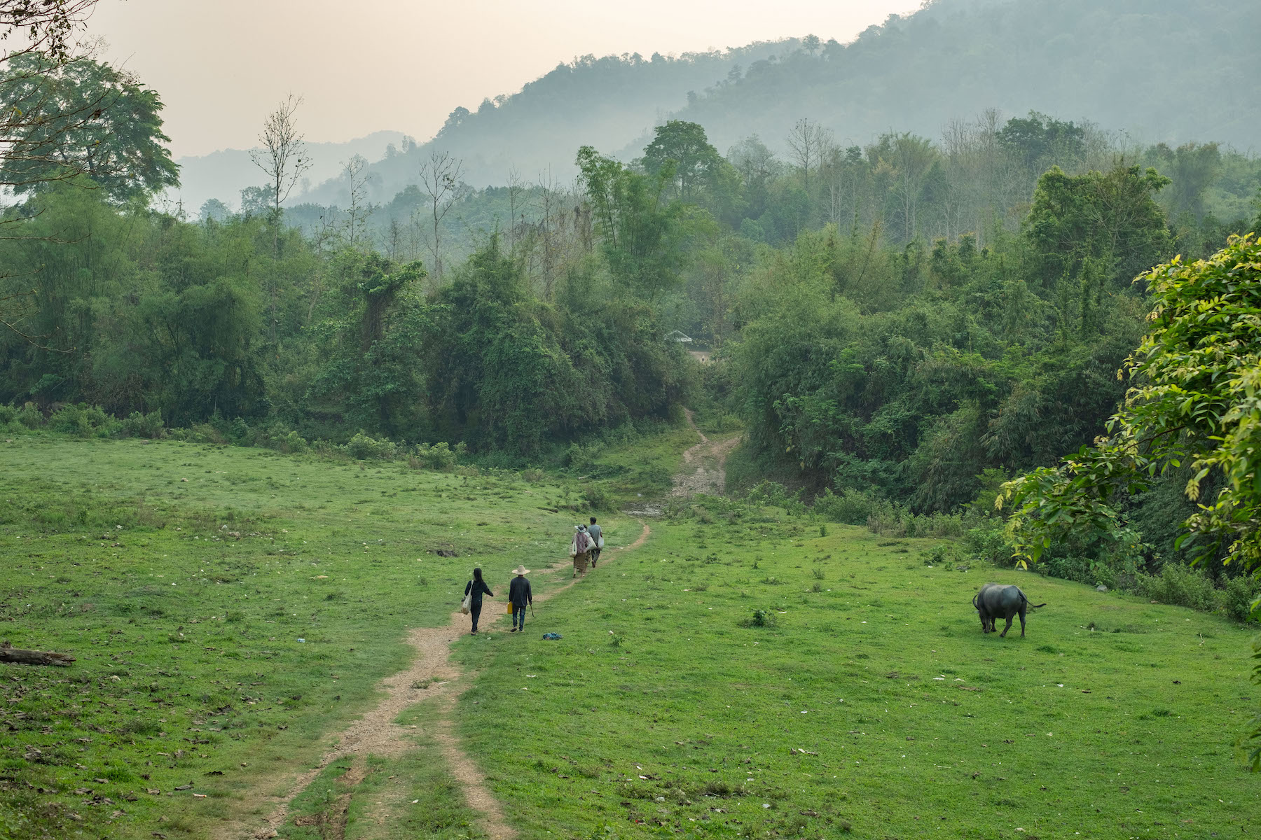 Strengthening forest governance is vital for growth of Southeast Asia's forests