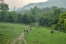 Permalink to: Strengthening forest governance is vital for growth of Southeast Asia's forests