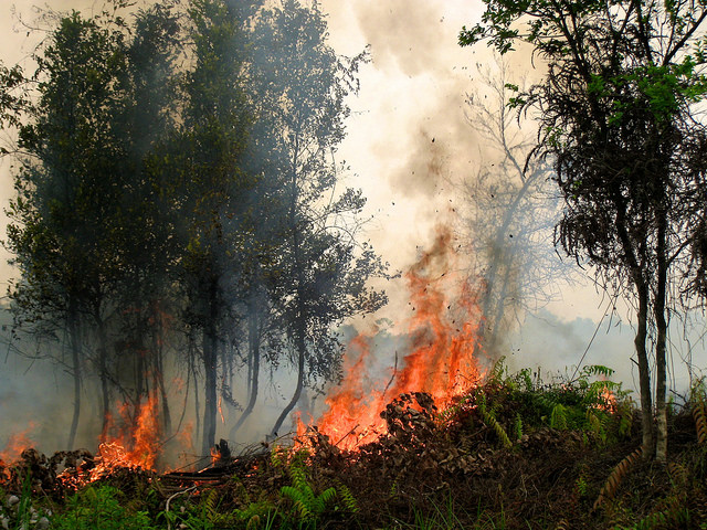 Sparking debate over fire use on agricultural land in Indonesia