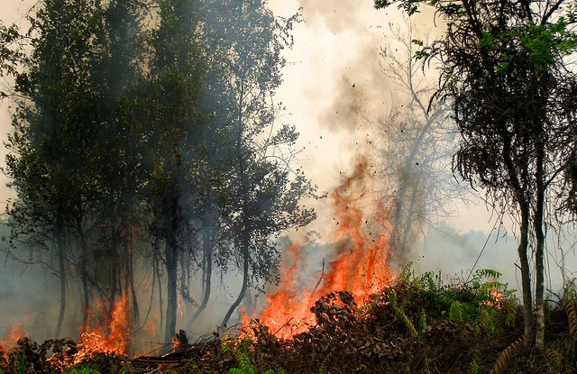 Fires burn in Palangkaraya in Central Kalimantan, Indonesia.