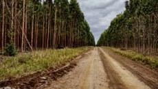 Plantaciones forestales a escala deben considerar impactos socioeconómicos para las comunidades