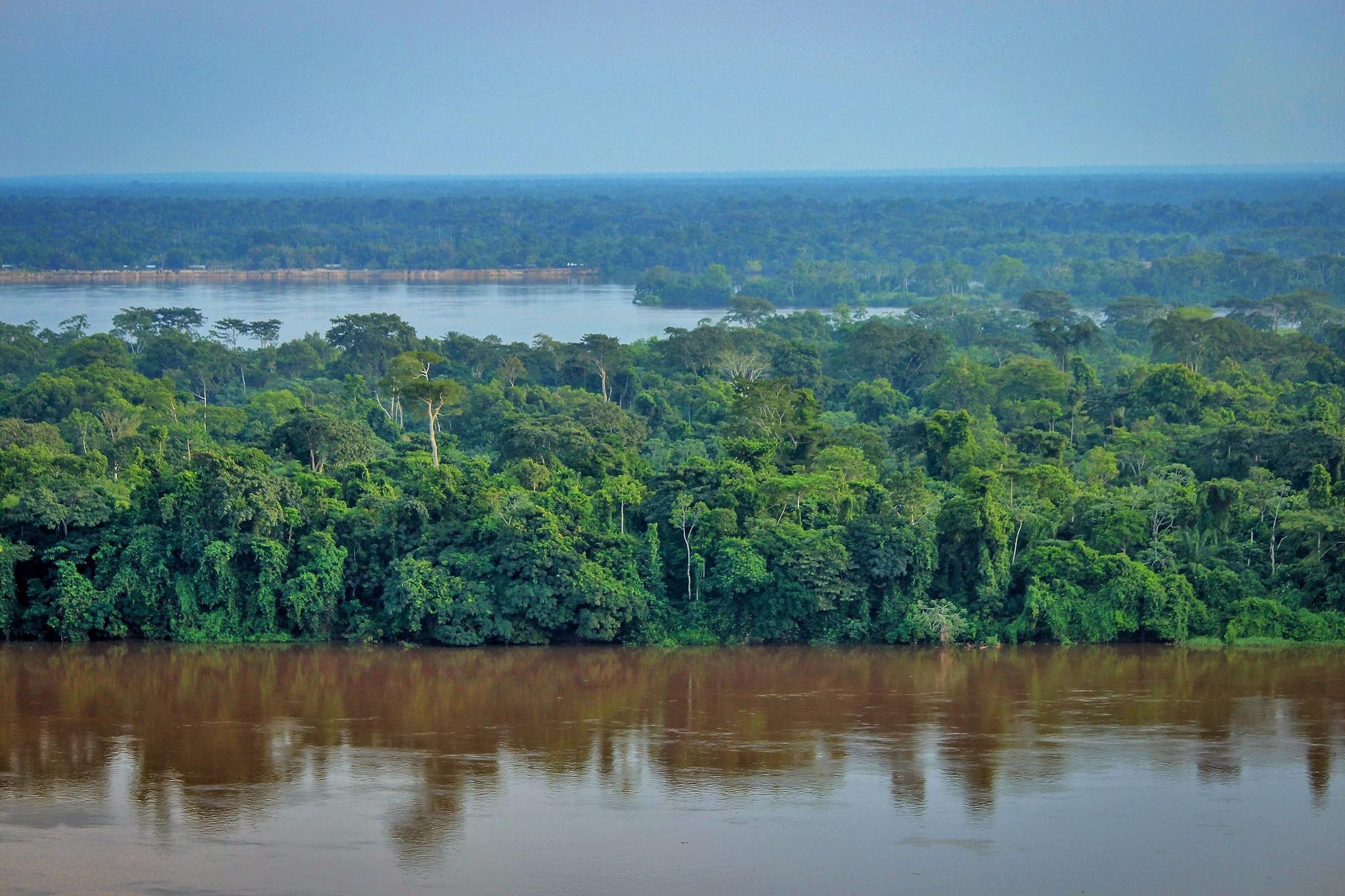 Feliz Día Internacional de los Bosques y empecemos a restaurar nuestro planeta