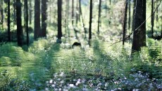 Quiz: Feliz Día Mundial del Agua. Y gracias a los bosques