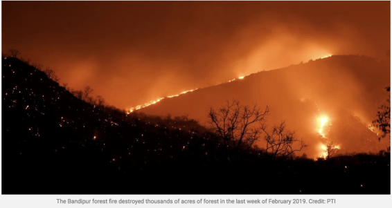 colonialism, wildfire, controlled fire, Adivinasi, Kattunayakans, Soligas, Bandipur-Mudumalai-Wayanad forest, India,