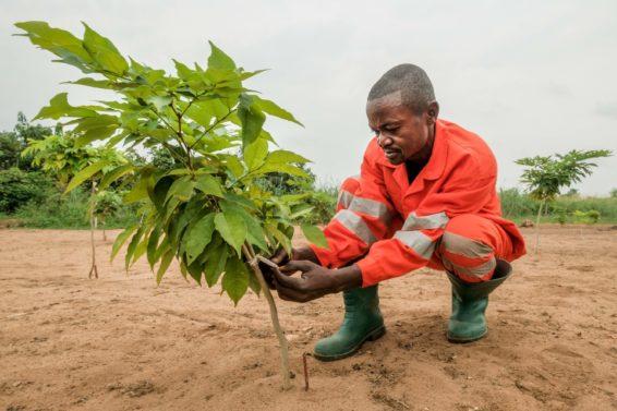 landscape restoration, tree planting, planting trees, Ethiopia restoration, Ethiopia, africa