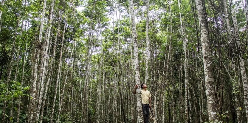 Agroforestry, tree plantation, restoration