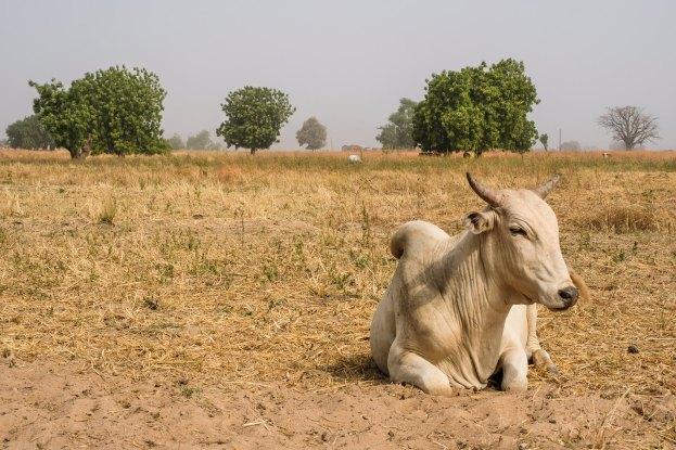 Pastoralisme et agriculture : préserver la paix dans la zone tampon du parc national