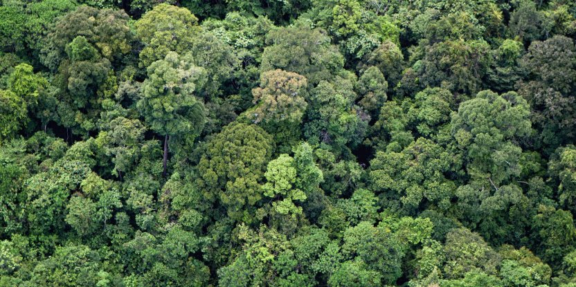 Borneo, protected forest, WWF, logging, deforestation, sustainability, Borneo protected forest