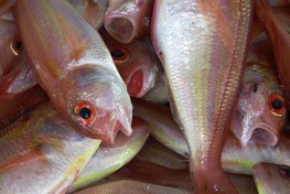 fish, fish market, nutrition, food security, water and forests, fisheries and forests
