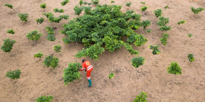 Aerial view of a man planting trees in a dry ecosystem