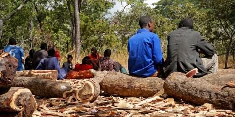 rosewood, mukula, CITES, illegal logging