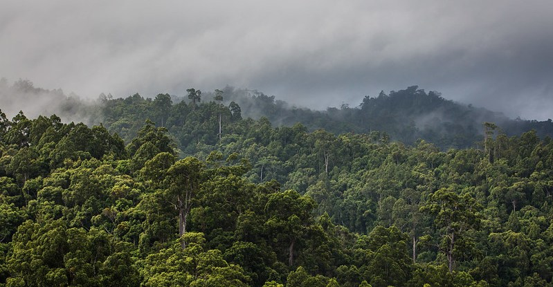 A view of dense rainforest with low hanging clouds hovering above it