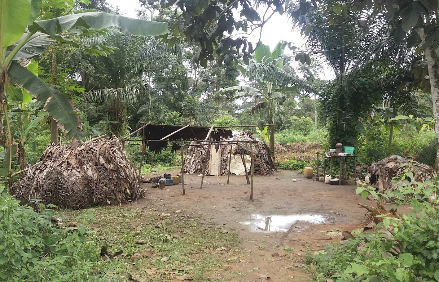 Baka leaf huts