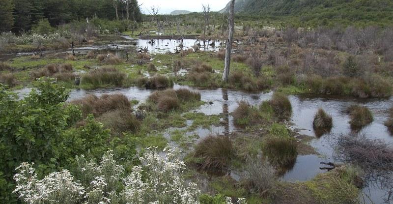 Peatland in Tierra del Fuego