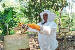 A beekeeper wearing protective gear works with bees