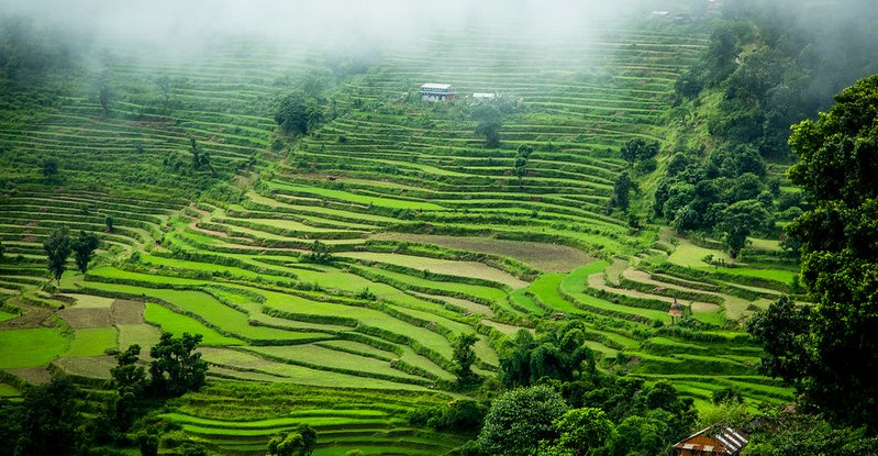 A vibrant terraced hillside landscape
