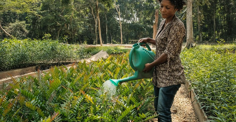 A woman waters using a watering can in a plant nursery
