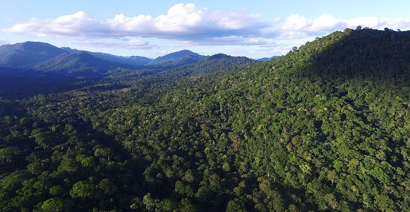 Pdf | the atlantic forest, the second largest forest in south america and one of the most biodiverse biomes in the world, is also one of the. Brazil S Atlantic Forests Are Naturally Regenerating Much Faster Than Expected Cifor Forests News