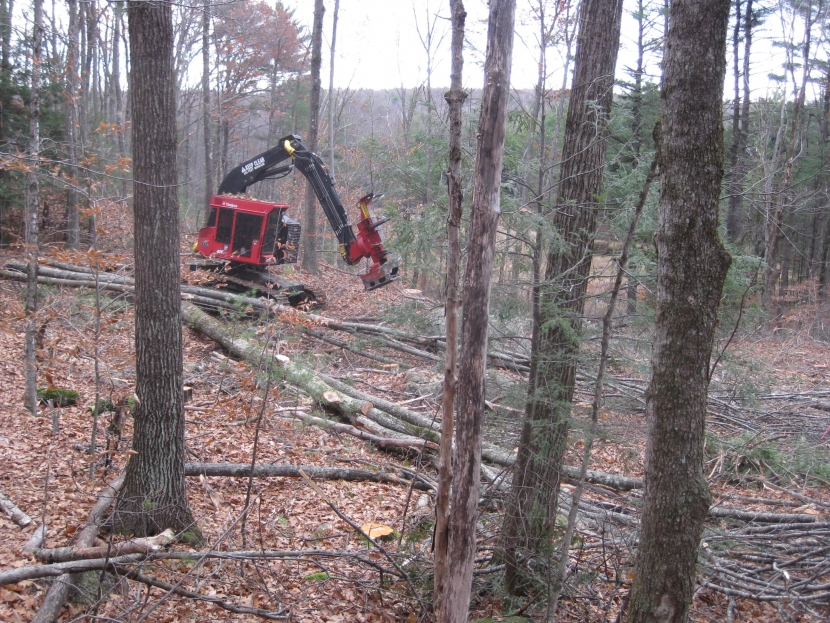 One tree can start a forest; Forestry Research Whole Tree Harvesting Forest Society
