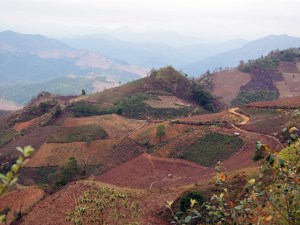 Spontaneous adoption of successful trials of agroforestry systems is sometimes done by neighbouring farmers, as seen in this landscape in Dien Bien province, but the lack of national policy hinders widespread expansion. Photo: World Agroforestry Centre/Robert Finlayson