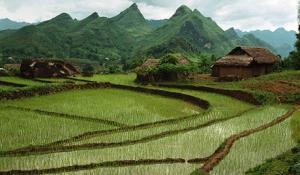 vn-rice-farms
