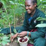 A farmer harvests plantain from a rubber-based agroforest. Photo: ICRAF