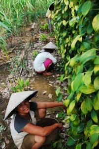 Agroforestry activity, West Kalimantan - Indonesia, 2009. Photo: Ryan Woo/CIFOR