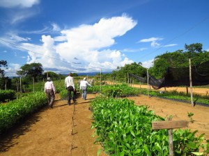 Native tree nursery in Colombia for restoration. Photo: Bioversity International/C.Alcazar Caisedo