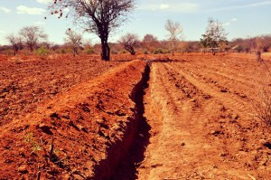 To understand climate change it is important to look at soils and emissions. Photo: World Agroforestry Centre