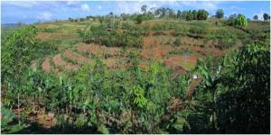 Conservation agriculture with trees. Photo: Agustin Mercado Jr/ICRAF