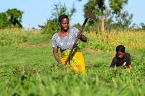 So what's the right balance between theorizing about gender and practically working the field? Researchers at the workshop were asking themselves. Photo: Neil Palmer/CIAT