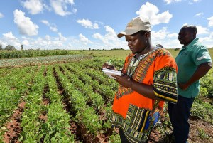 The products from agricultural investments in Mozambique tend to stay on the domestic market. Photo: Neil Palmer/CIAT