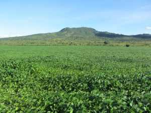 Soy plantation in Niassa province, Mozambique. Researchers warn of labelling all agricultural investments as land grabbing. Photo: George Schoneveld/CIFOR