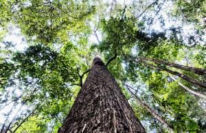 The Unamat forest, Puerto Maldonado, Madre de Dios, Peru. Photo: Marco Simola/CIFOR