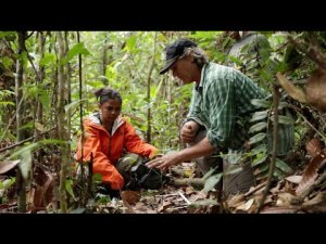 Watch: Greenhouse Gas Emissions Associated with Land Use Change in Tropical Peat Swamp Forest