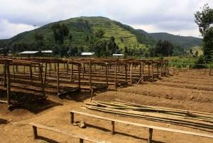 Rwanda has vowed to restore two million ha, 80 percent of which is farmland. Photo: Alba Saray Pérez Terán/CIFOR