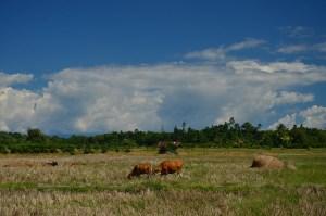 Agricultural land at Seram Barat District, Maluku. Photo by Tuti Herawati/ CIFOR