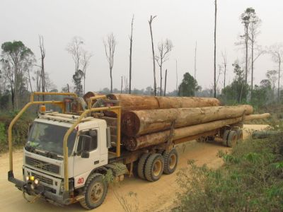 Many landscapes in the tropics are now covered by forests that have been disturbed by logging. Photo: TmFO