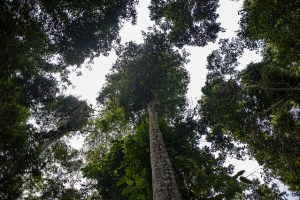The DR Congo has the second largest tropical forest area in the world. Photo: Ollivier Girard/CIFOR