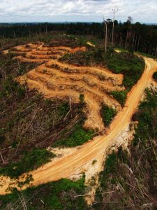 Deforestation in Jambi, Sumatra, Indonesia. Photo: Asep Ayat for 2014 Global Landscapes Forum Photo Competition