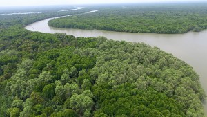 Aerial view of a mangrove forest in Jaring Halus, North Sumatra, Indonesia. Photo by: M. Edliadi/CIFOR