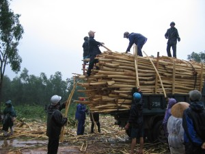 Loading bamboo onto a truck in Bach Ma National Park, Viet Nam. Photo: Luke Preece/CIFOR