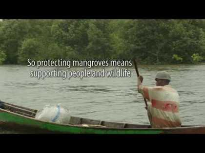 Protecting North Sumatran mangroves, supporting biodiversity, people and the world