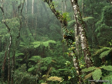 montane-rainforest-mount-kinabalu-national-park-borneo1